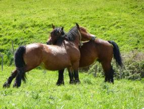 Albergue-la-torre-multiaventura-ruta-caballo1